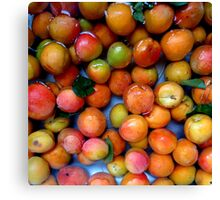 First Apricots of 2016 Canvas Print