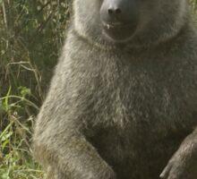 male baboon Sticker