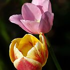 tulips, get one the second is free by scry