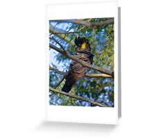 PARROT ~ Yellow-tailed Black Cockatoo Greeting Card