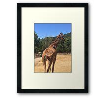 Tail Swinging Giraffe  Framed Print