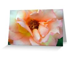 Close up on light pale pink rose petals. Greeting Card