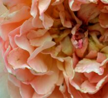 Close up on light pale pink rose petals. Sticker