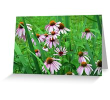 Delicate pink flowers in the grass. Greeting Card