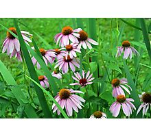 Delicate pink flowers in the grass. Photographic Print