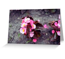 Small pink flowers on dry land. Greeting Card