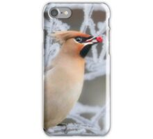 Winter fruit for a winter visitor iPhone Case/Skin