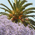 California Spring/Summer Day by RichCaspian