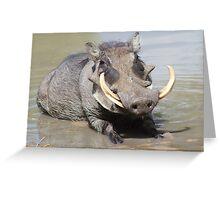 Warthog - African Wildlife Background - Summer Swim Greeting Card