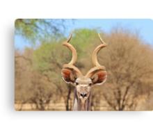 Kudu - African Wildlife Background - Spiral Beauty Canvas Print