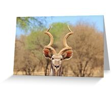 Kudu - African Wildlife Background - Spiral Beauty Greeting Card