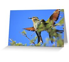 Bee-eater - African Wild Birds - Colors of Flight Greeting Card