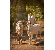 Three four-legged friends Photographic Print