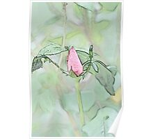 Red garden rose bud on a lush green background  Poster