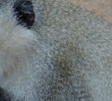 Monkey steals our banana Sticker