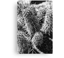 Cactus Waiting Canvas Print