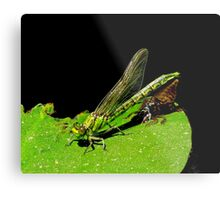 beauty emerges from the beast- green dragonfly Metal Print