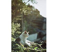 Japanese Sunset Photographic Print