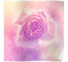 Digitally manipulated painting of a Pink English rose as seen from above  Poster