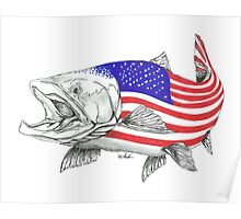 American Steel Head Salmon Poster