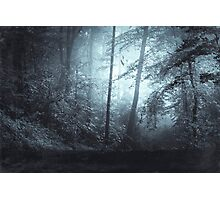 Blue Mystic Forest Photographic Print