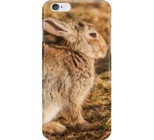 Rabbit in the Morning Sun iPhone Case/Skin
