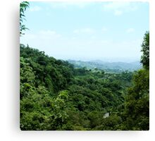 "#886.002 ""Tranquil Forest/ Taichung"" Canvas Print"