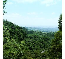 "#886.002 ""Tranquil Forest/ Taichung"" Photographic Print"