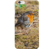 Robin on the Floor (Erithacus rubecula) iPhone Case/Skin