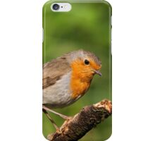 Robin on a Branch (Erithacus rubecula) iPhone Case/Skin