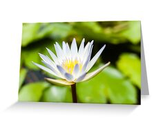 White Lotus Water Lily Greeting Card