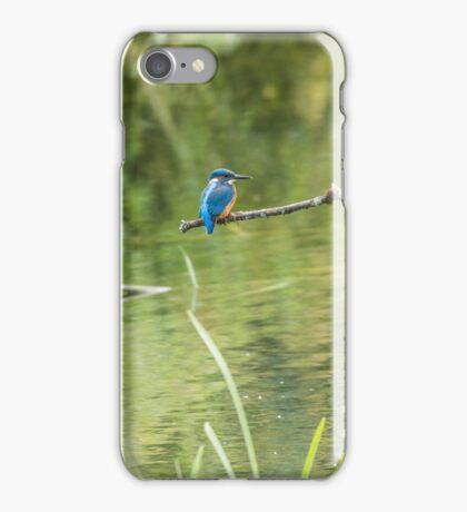 Kingfisher ( Cerylidae) iPhone Case/Skin