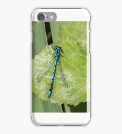 Damselfly (Coenagrionidae) iPhone Case/Skin