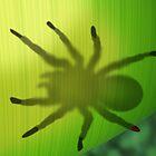 Rainforest spider hiding behind a leaf by Paul Fleet