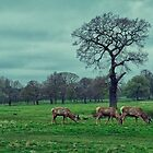 Grazing Time by Lee  Gill