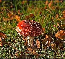 Fly Agaric by ten2eight