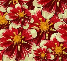 Blooming Flowers and Petals - Red White Yellow by sitnica