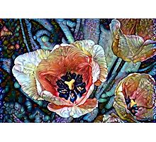 Blooming Tulips Photographic Print