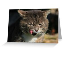 Tabby cat licking lips Greeting Card