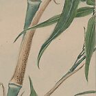 Bamboo Foliage - Branches, Leaves - Green Brown by sitnica