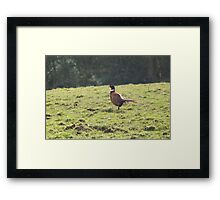 Out on a hike Framed Print