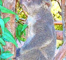 Cool Koala Sticker