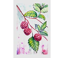 Wildberry Watercolor Photographic Print
