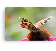 Painted Lady Butterfly II Metal Print