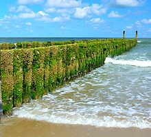 breakwaters on the beach, northsea in Domburg Holland by 7horses