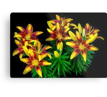Nature's Fireworks Flowers Metal Print