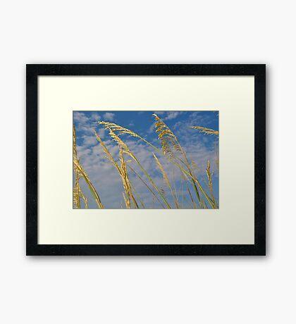 Sand Dunes ~ Carolina Beach, NC Framed Print
