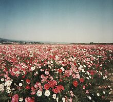 Floral Field by JessicaCarr