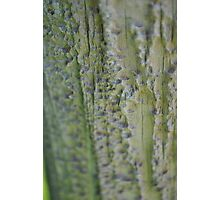 textured fence Photographic Print