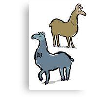 llamas with an attitude Canvas Print